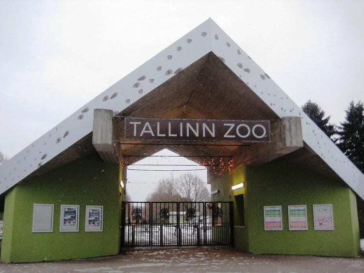 Таллин достопримечательности фото